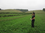 Feed the soil: lessons from a stock-free organic farm for urban cropping
