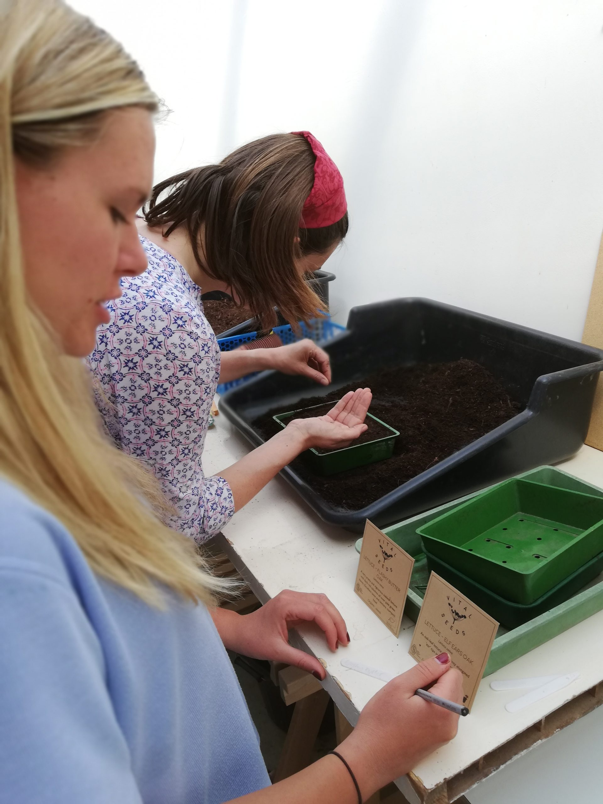 seed sowing on yoga and food growing retreat at Viveka Gardens