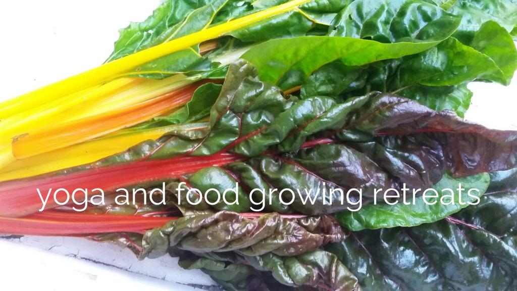 yoga and food growing retreats