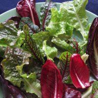 winter salad leaves