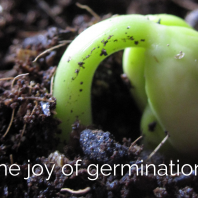 The Joy of Germination