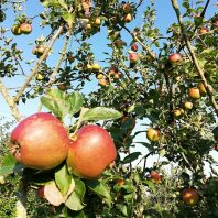 Orchard Day